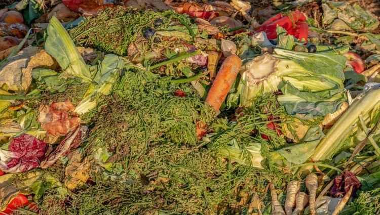 Evitar o desperdício de alimento é um desafio no Brasil